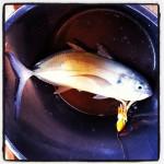 Onze eerste zelf gevangen vis!!