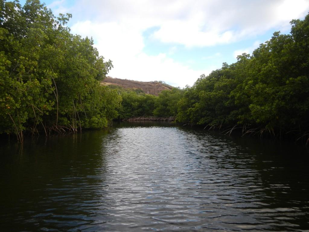 Dwalen door de mangrove in Culebra