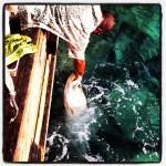 Feeding the Fishies...