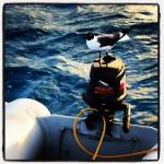 Seagull powerrrrr