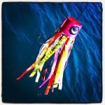 Heeee, een regenboog vis!
