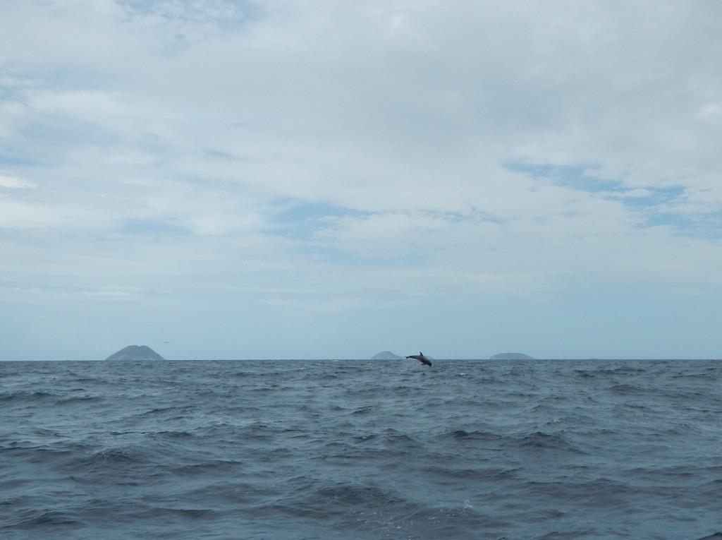 Als je goed kijkt zie je de springende dolfijn! Wow