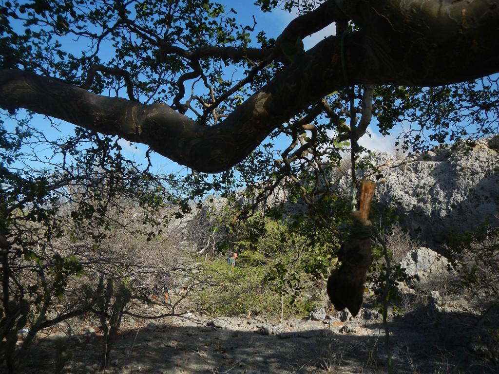 Pootjes aan de bomen... Voodoo???
