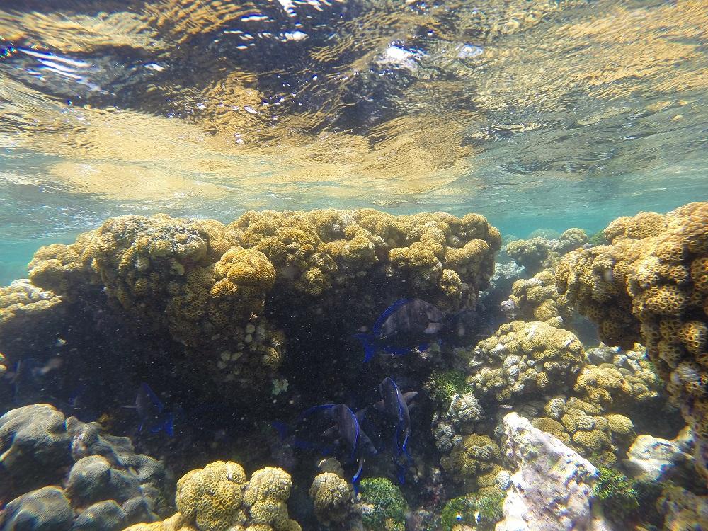 De onderwatertuin bij Carenero