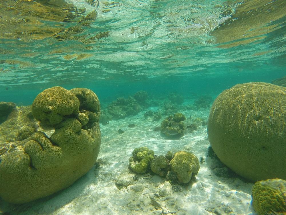 Laatste onderwaterfoto uit Sotavento!