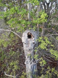 De 'gekraakte' termietenheuvel
