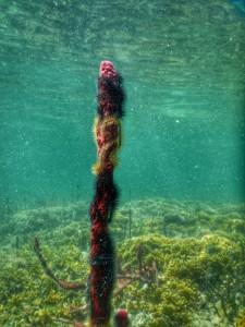 Een knalrode spons bedekt met slagsterren!