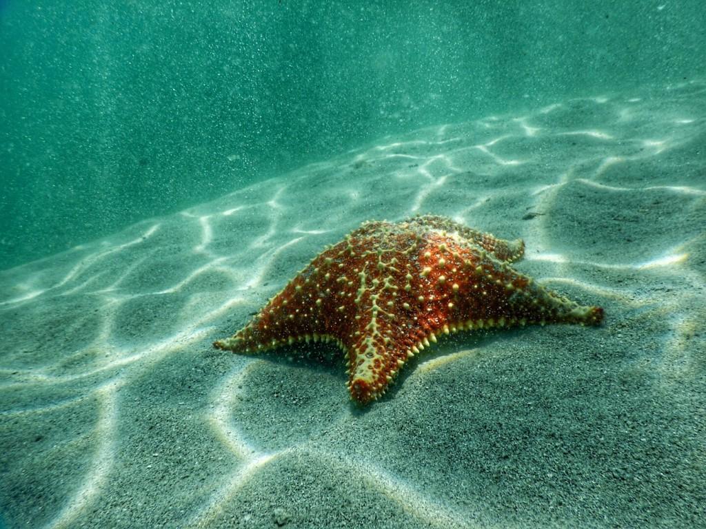 De sterren onder water...