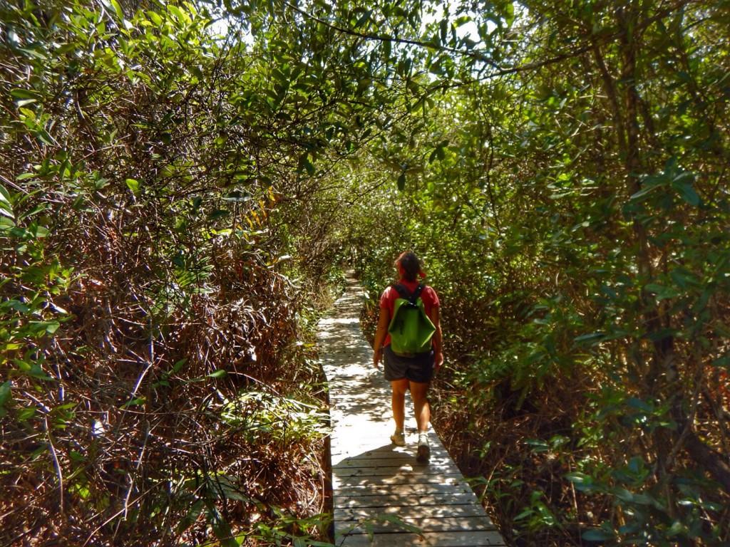 The Mastic Trail