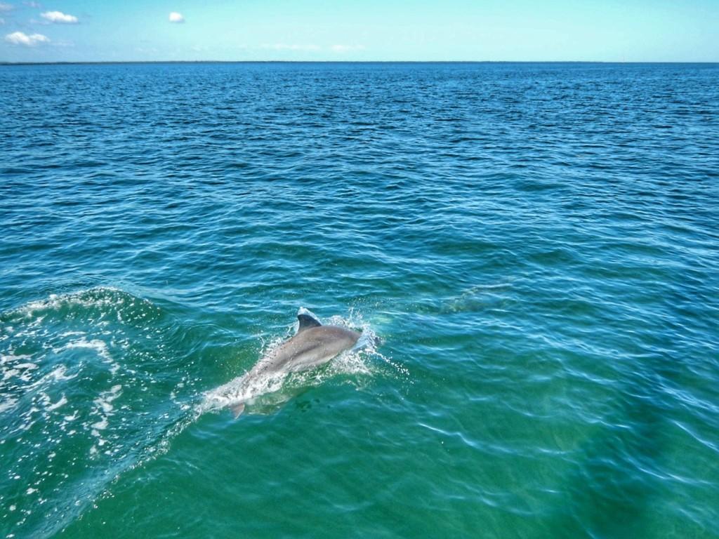 Dolfijnen zwaaien ons uit