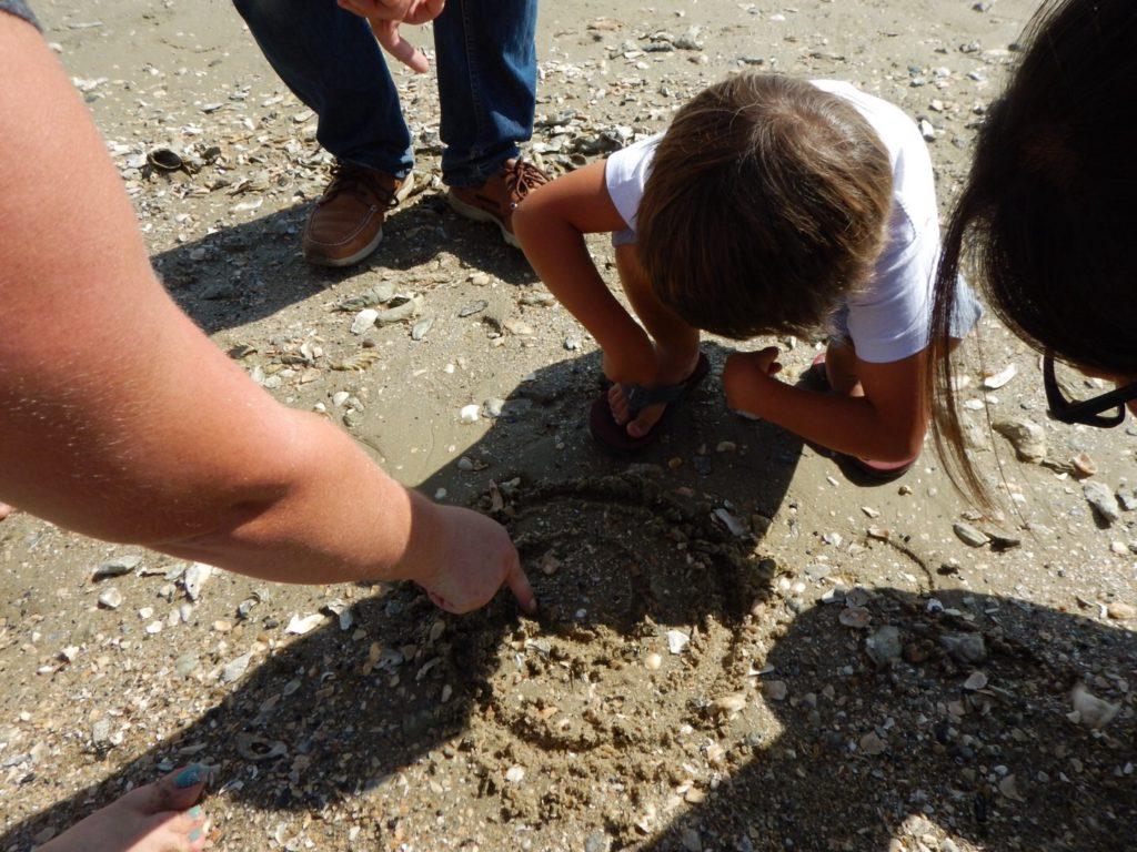 Haaientanden op het strand!